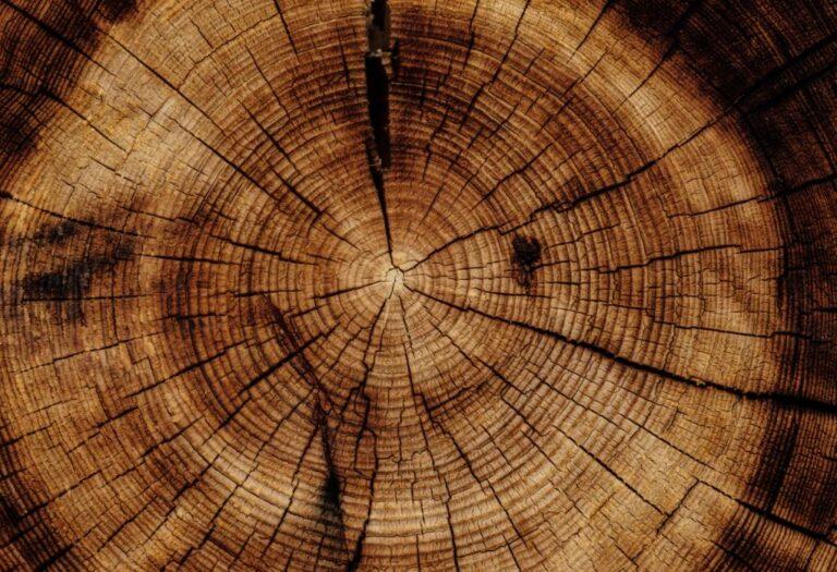 12 types de bois à connaitre pour vos constructions